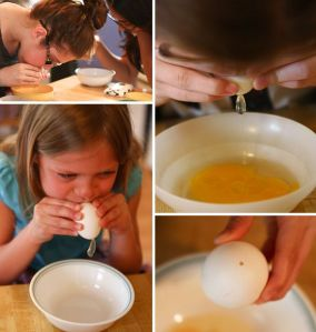blown out eggs