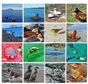 galapagos-collage